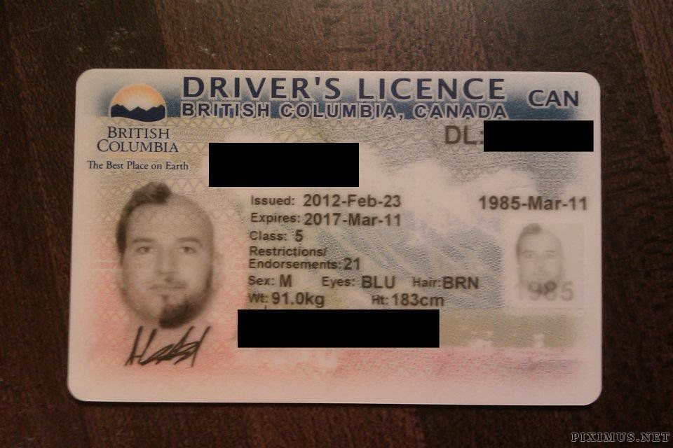 Novelty Driver's License