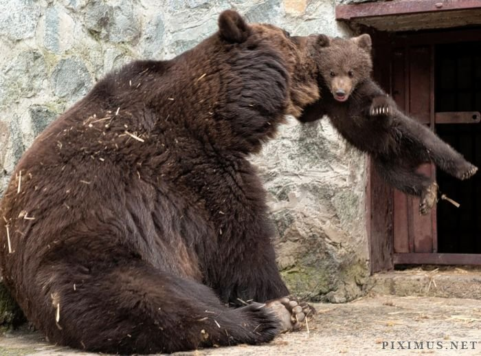 Mother Bear Angry at Her Cub