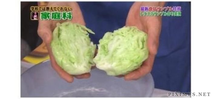 Fake Cabbage. Made in China