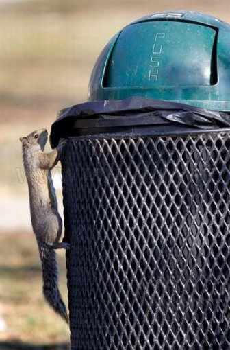 Squirrel Raids Park Trash Can
