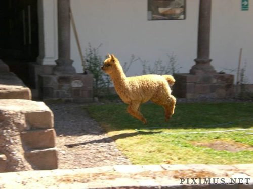 Funny hover animals