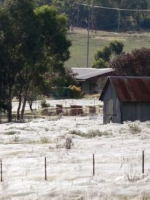 Spiders Invade Australia