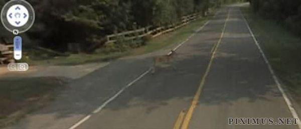 It Killed Bambi