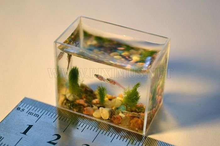 World's Smallest Aquarium | Animals