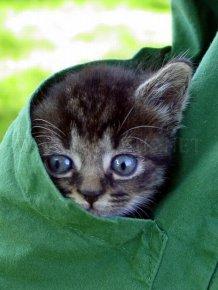 Kittens in Pockets