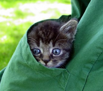 Kittens in Pockets