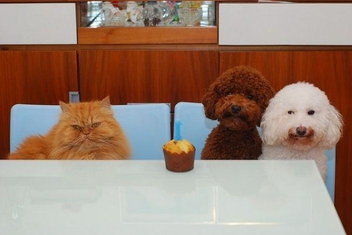 Animal Parties
