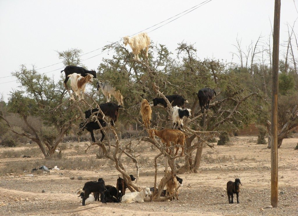 Only in Africa