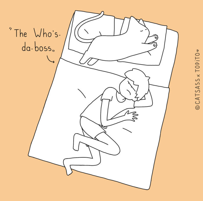 The Cat's Guide To Sleeping With Your Human