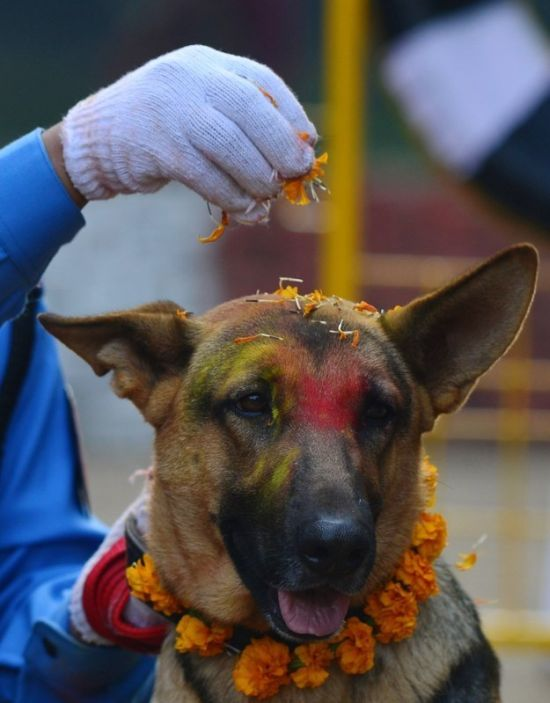 Nepal Has An Entire Festival That's All About Celebrating Dogs