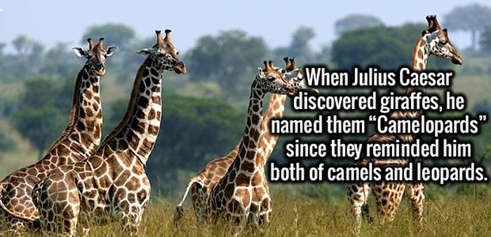 Interesting Facts To Amuse Your Brain And Make You Think