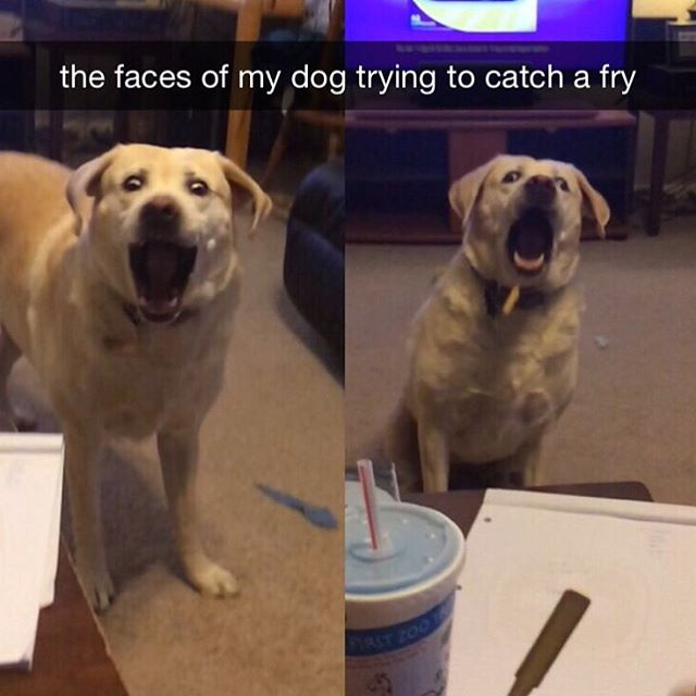 Dog - Man's Best Friend, part 4