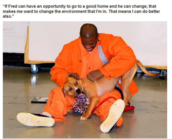New Program Pairs Prisoners With Shelter Dogs