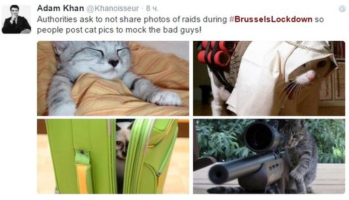 Brussels Is Using Pictures Of Cats To Confuse ISIS