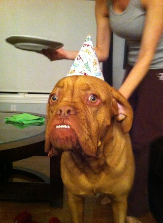 Say Hello To The 32 Most Awkward Dogs Of 2015, part 2015
