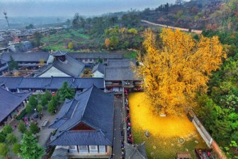 Buddhist Temple Gets A New Look Thanks To A 1,400 Year Old Chinese Ginkgo Tree