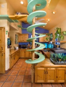 This House Is A Cat's Dream Come True