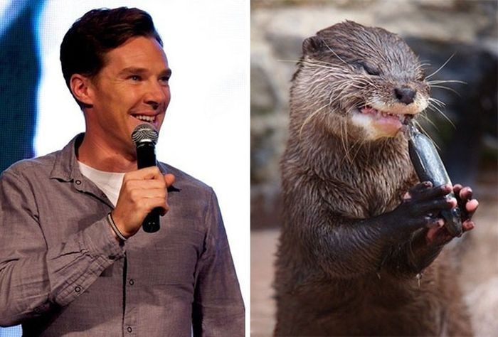 Undeniable Proof That Benedict Cumberbatch Is Definitely An Otter