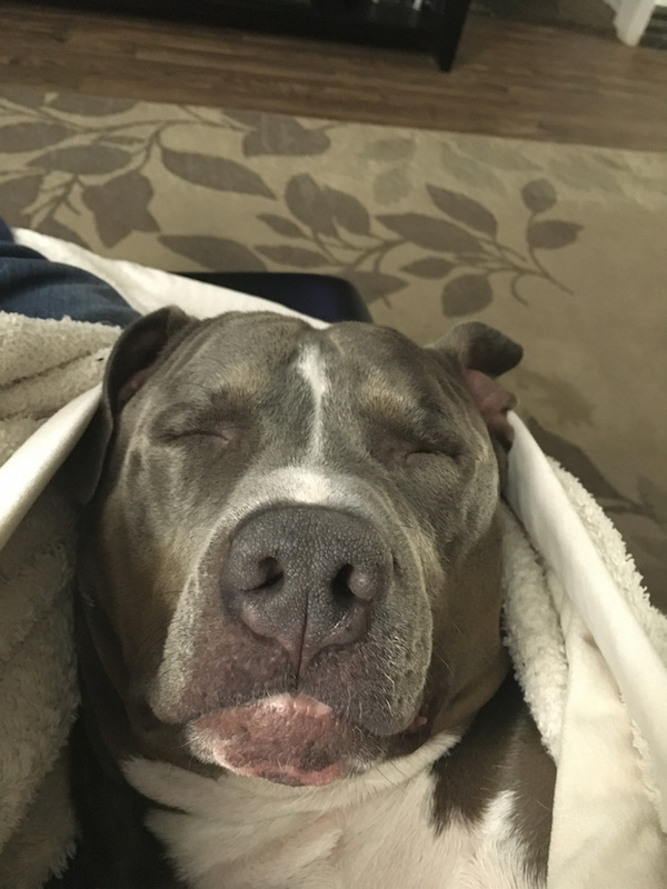 Dog - Man's Best Friend, part 5