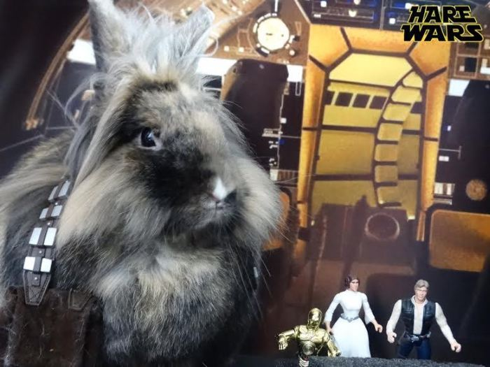 Chewbacca Gets Replaced By A Bunny For Hare Wars