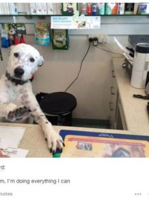 The Funniest And Most Outrageous Posts About Animals In The History Of Tumblr