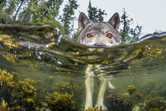 These Are The Top 20 National Geographic Photos Of 2015, part 2015