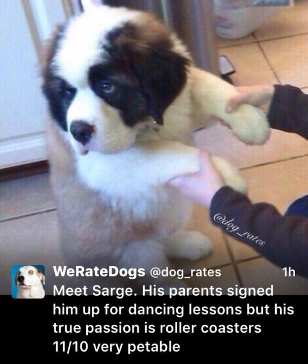 We Rate Dogs Is The Twitter Account The Animal Kingdom Needed