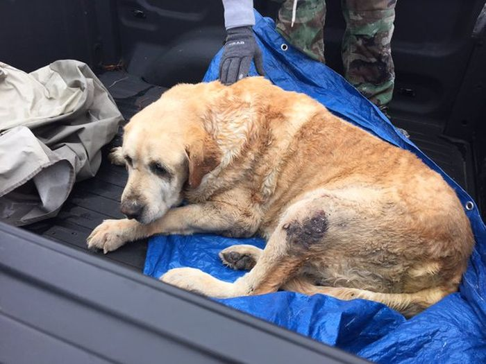 These Two Brave Dogs Survived After A Tornado Trapped Them Under A Home
