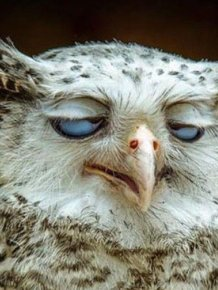 Awesome Animals That Clearly Have A Hangover