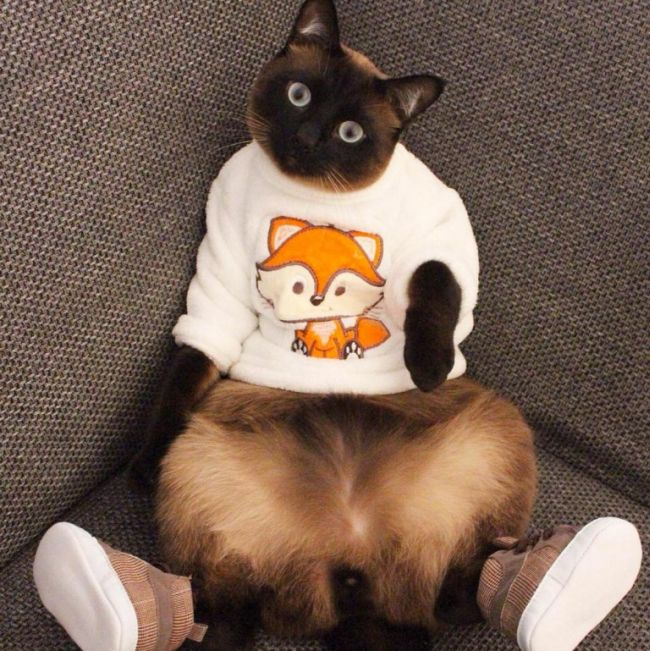 Meet Little Lenny The Cat That's Taking Instagram By Storm