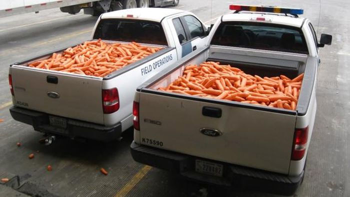 Drug Smugglers Get Busted After Trying To Disguise Marijuana As Carrots