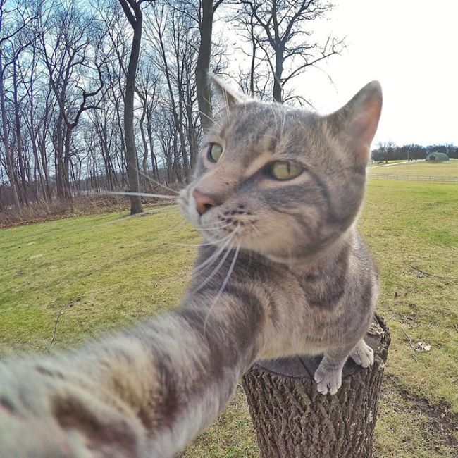 Meet The Cat That Takes Better Selfies Than Most People