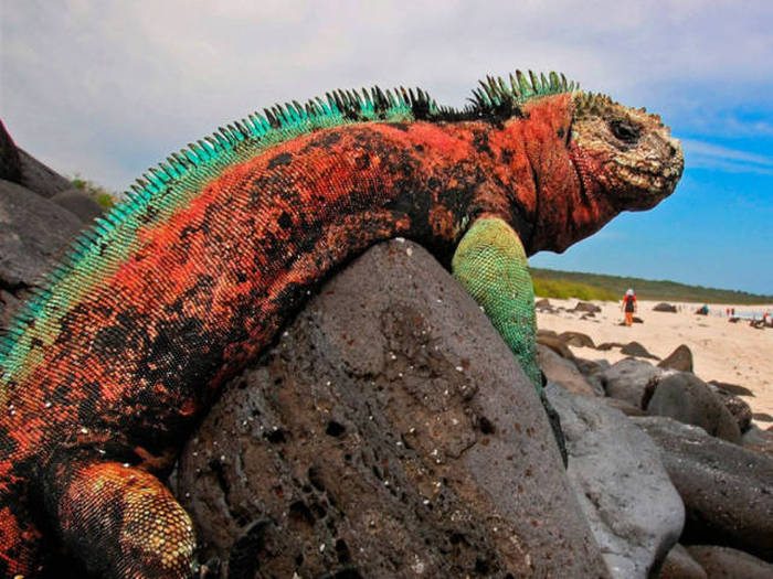 This Is Why The Galapagos Islands Are A Must See Travel Destination