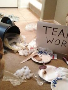 Owners Shaming Their Pets Is The Most Hilarious Punishment