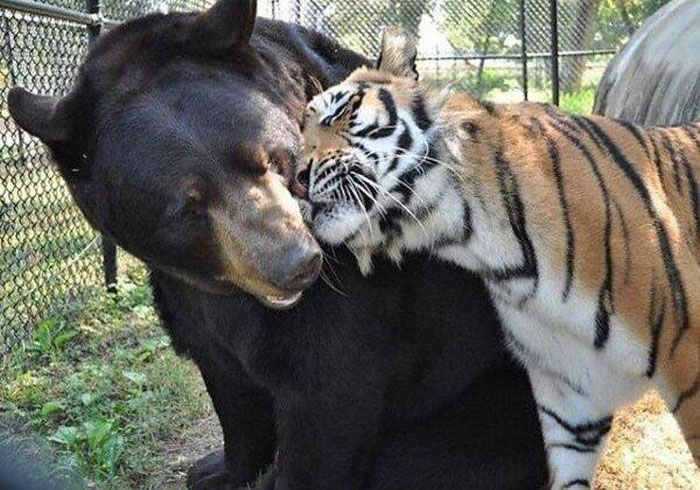 Animals That Make Better Couples Than Most Humans Do