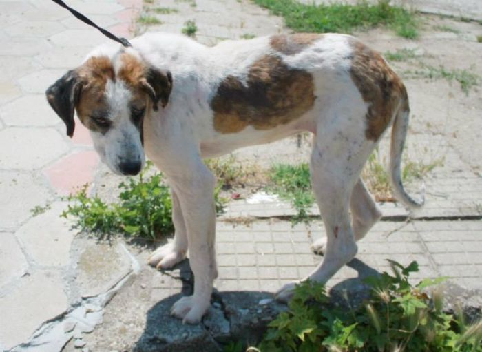 Dying Street Dog Rescued