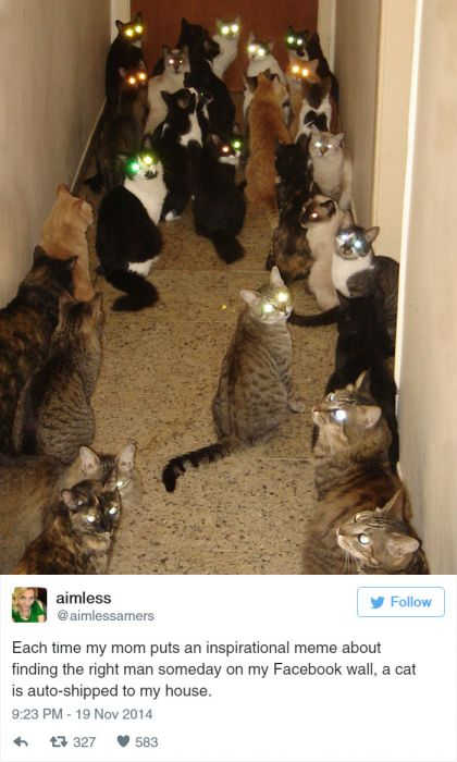 The Funniest Tweets About Cats That The Internet Has To Offer