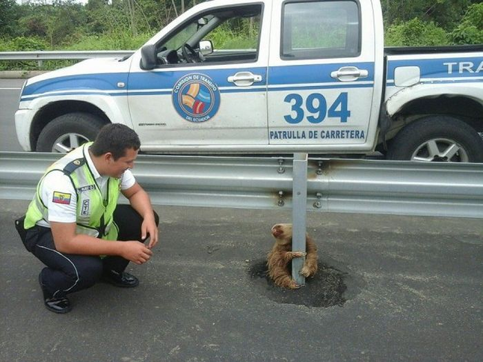Little Guy Being Rescued After Trying To Cross The Highway In Ecuador