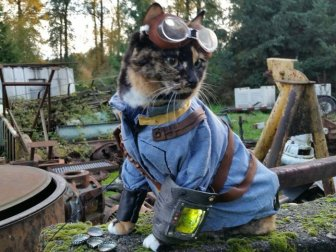 Cats in Cosplay Is The Cutest Thing Ever