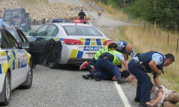 New Zealand Police End A Car Chase With A Little Help From Local Sheep