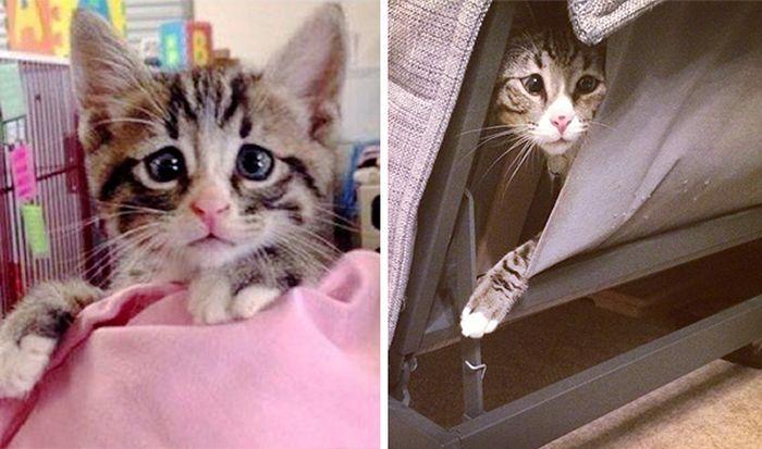 Say Hello To Bum The Cross Eyed Kitten