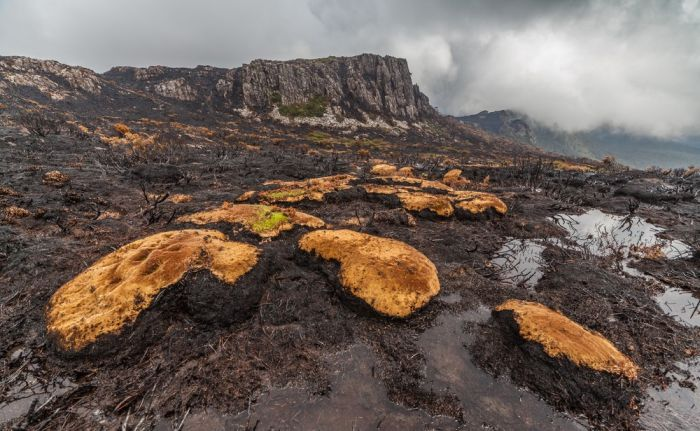The Island Of Tasmania Has Been Damaged After Fires Burned For A Week