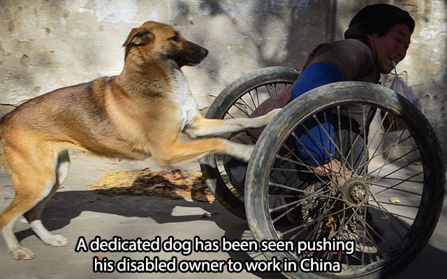 Dog Man S Best Friend Part 6 Animals