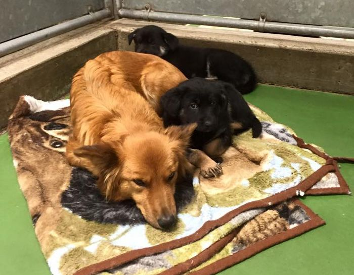 Dog Tries To Comfort Crying Puppies After Breaking Out Of Its Kennel