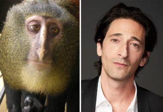Celebrities Side By Side With Their Animal Doppelgangers