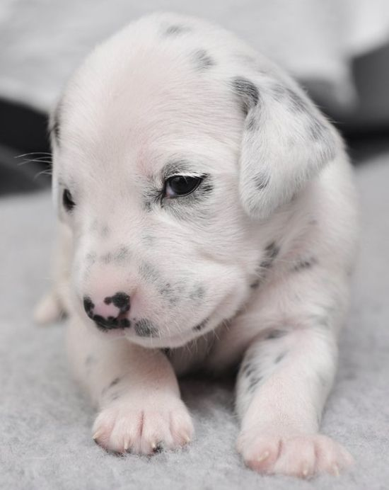 Dogs Look Very Different When They're Only 3 Weeks Old