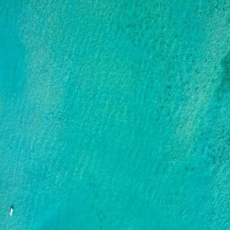 Thousands Of Sharks Spotted Swimming Close To The Beaches Of Florida