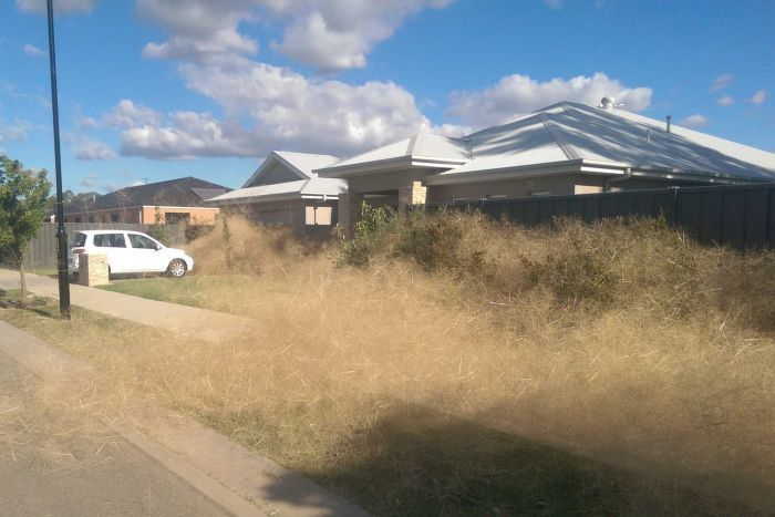 This Australian Town Is Being Taken Over By Panic Grass