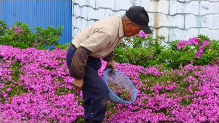 Chinese Man Creates Giant Flower Garden For His Blind Wife