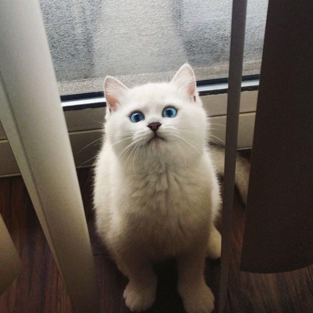 Be Careful Because You Might Get Lost In This Cat's Beautiful Eyes